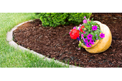 Guide to Improving Garden Soil with Mulch