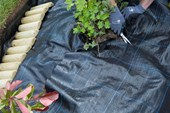 Trim Weed Control Fabric around Plants
