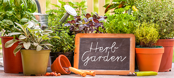 Creating Your Own Herb Garden