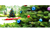 Choosing Your Christmas Tree – Real vs Artificial