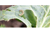 8 Ways to Control Common Garden Pests