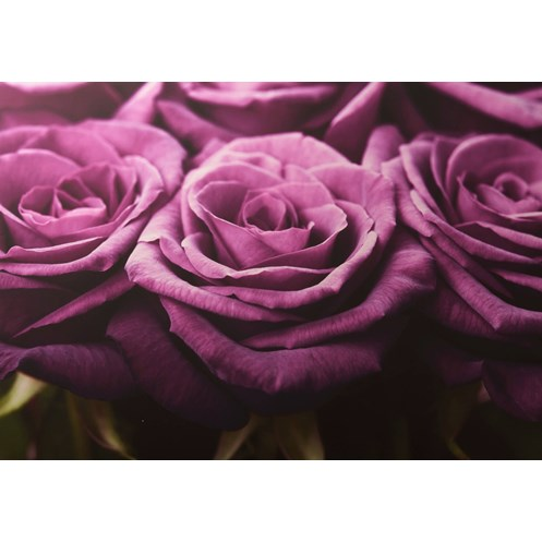 Graham & Brown Home Plum Roses Row Canvas Print