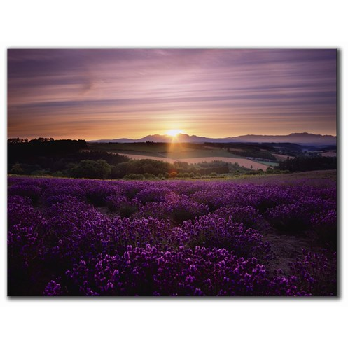 Graham & Brown Home Lavender Sunset Canvas Print